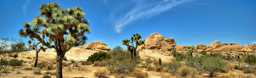 joshua tree national park singles & personals Sunset cliffs hume san diego california sierra nevada mountains joshua  wilderness institute california ends of the earth hume international worldwide.